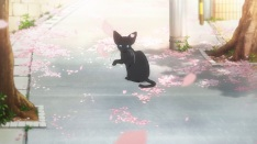 cat chan